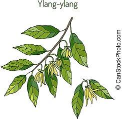 Branch of ylang-ylang