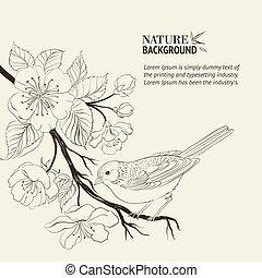 branch., oiseau, dessiné, sacura, main