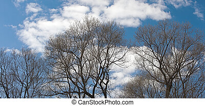 Branch on a background of the sky