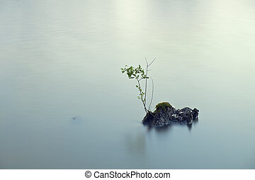 Branch on the lake