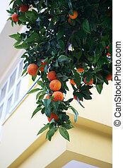 orange, tree, fruits, green