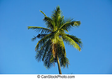 branch palm leaf trees on the cloud blue sky with beautiful sunset background