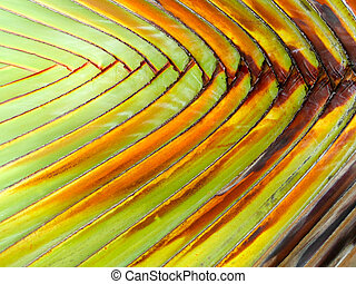 branch palm leaves pattern nature background