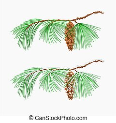 Branch pine Eastern White pine Christmas tree vector - ...