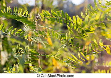 branch plants with green leaves at sunset