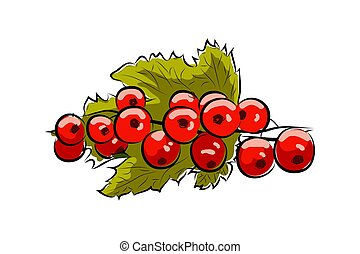 branch red currant - vector drawing of the red currant...
