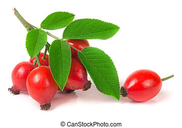 branch rosehip with leaves isolated on white background