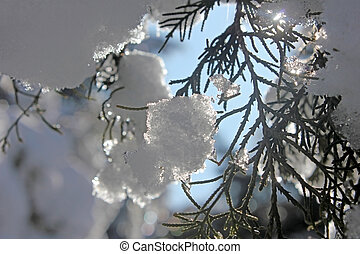 Branch, snow and sun