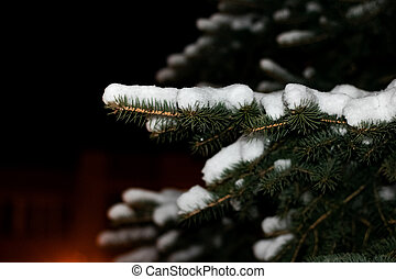 Branch spruce with snow in the night
