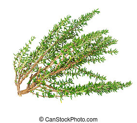 Branch thyme fresh herb isolated on white background
