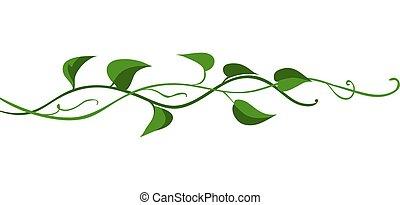 branch., torcido, salvaje, liana