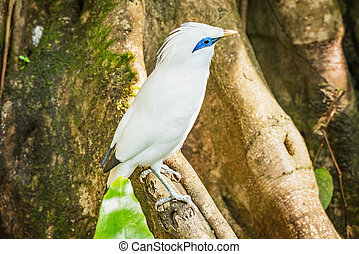 branch., træ, fugl