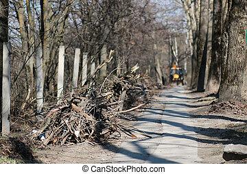 branch trash in the park