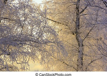 Branch tree in snow. Winter snow sunshine background. Tree ...