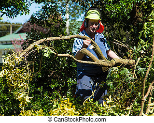 Man moving a trimmed branch. waering safety hat too.
