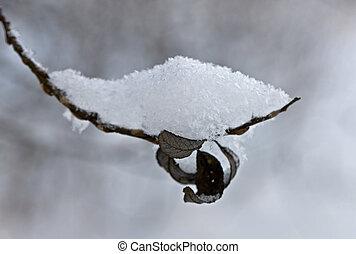 branch under snow
