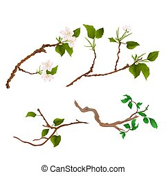 Branch various Sprigs twig apple tree and bush vintage hand draw vector.eps