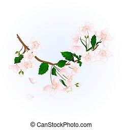 Branch wild Cherry vector