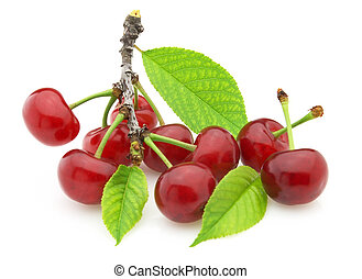 Branch with a cherry