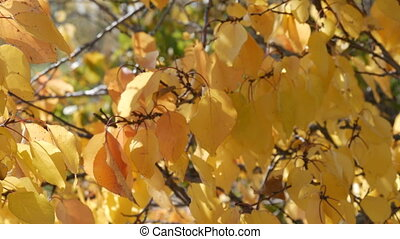 Branch with a yellow leaf in the autumn forest