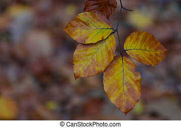 Branch with autumn leaves.