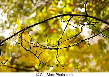 Branch with autumn leaves on background