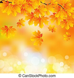 branch with autumn leaves on bokeh background