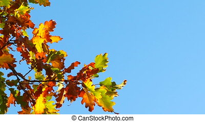 Branch With Autumn Multi-Colored Leaves Hanging On Blue Sky Background