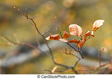 branch with beautiful autumn yellow leaf, background