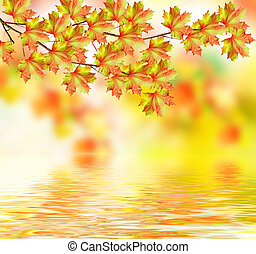 branch with beautiful colorful leaves. Autumn landscape.