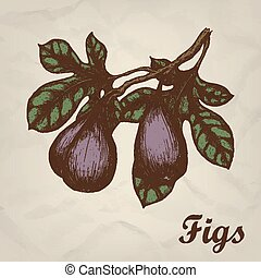 Branch with figs hand drawn vintage style. Vector illustration.