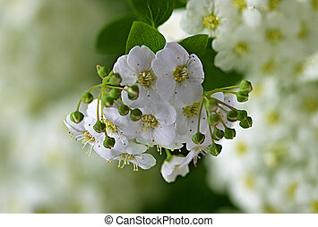 branch with flowers