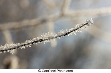 branch with frost close up