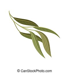 Branch with green leaves, floral design element vector Illustration on a white background