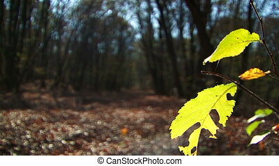 Branch With Green Leaves  Illuminated With Sun In Forest