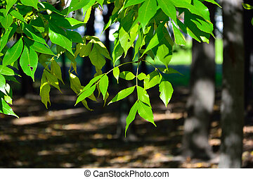 Branch with green leaves in a park