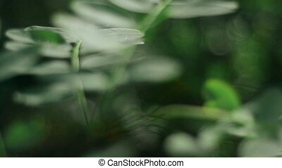 branch with green leaves in the forest - close-up of a...