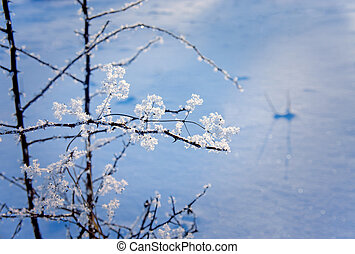 Branch with ice crystals