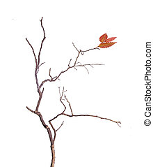 Branch with leaf