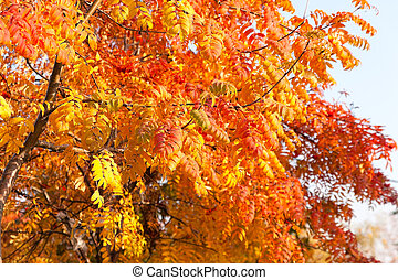 Branch with leaves in autumn