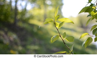 branch with leaves in the wind