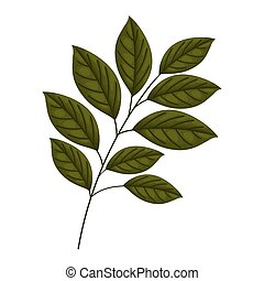 branch with leaves on a white background