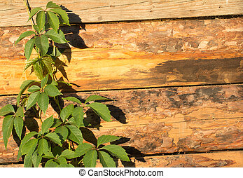 branch with leaves on a wooden background