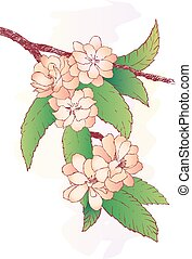 Branch with oriental cherry flowers isolated