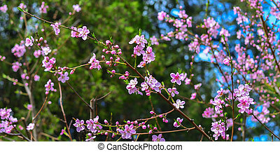 Branch with pink blooms