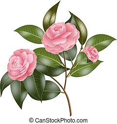 Branch with pink roses