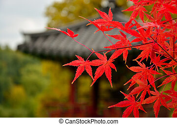 Branch with red autumn leaves