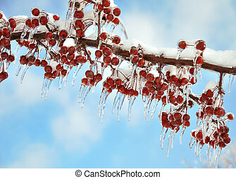 branch with red berries after ice storm - tree branch with...