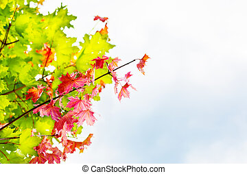 Branch with red maple leaves on autumn sky background copyspace