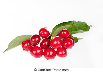 Branch with red ripe cherries